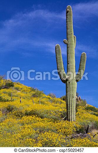 Desert Wildflowers in Spring - csp15020457