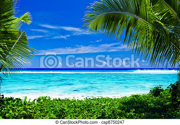 Deserted tropical beach framed by palm trees - csp8750247