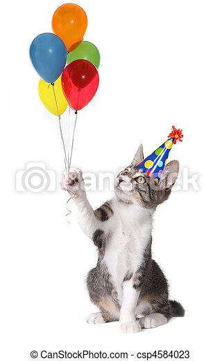 desgastar, balões, gato, aniversário, tolo, segurando, chapéu - csp4584023