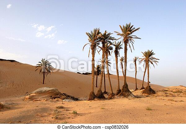El desierto del Sahara - csp0832026