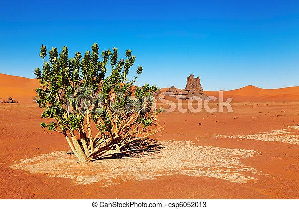 desierto de Sahara, Algeria - csp6052013