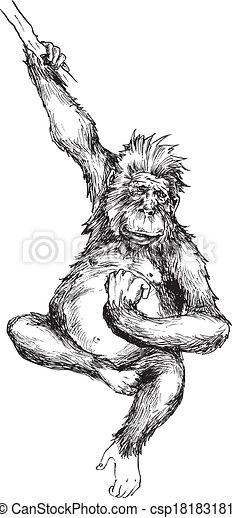 dessiné, main, singe, pendre - csp18183181