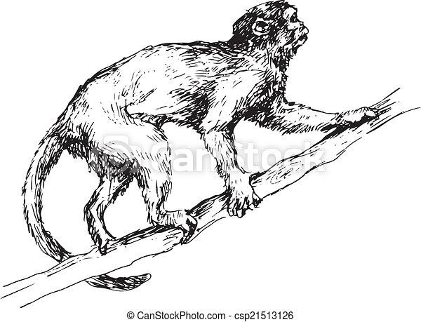 dessiné, singe, main - csp21513126