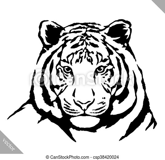 Dessiner Illustration Tigre Vecteur Encre Noire Blanc Dessiner