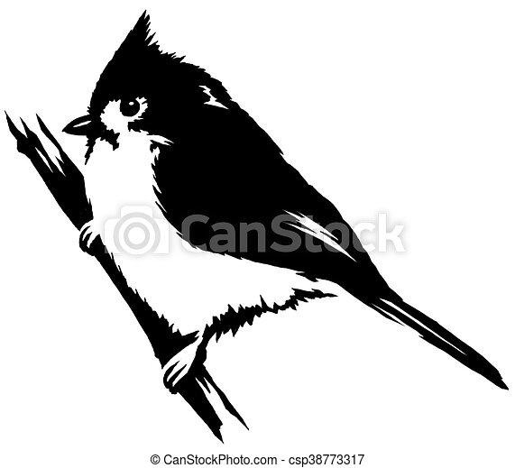 Dessiner Linéaire Illustration Peinture Cardinal Noir Oiseau Blanc