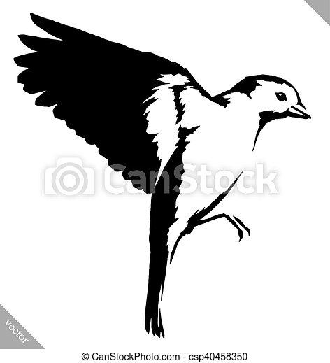 Dessiner Mésange Illustration Peinture Vecteur Noir Oiseau Blanc