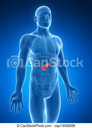 destacado, humano, páncreas - csp13092698