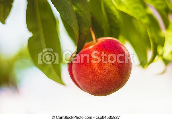 detail, dokola, strom, donášet, mladický list, ovoce, - - csp84585927