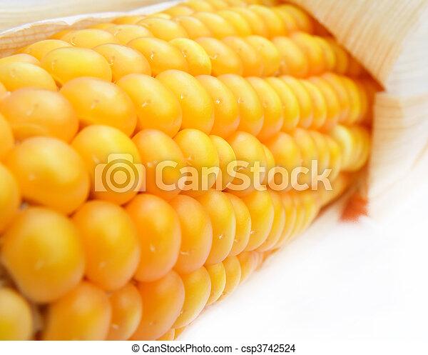 detail of a corn - csp3742524
