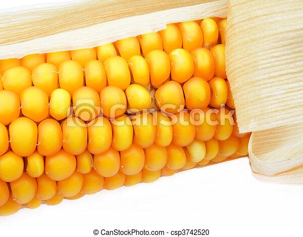 detail of a corn - csp3742520