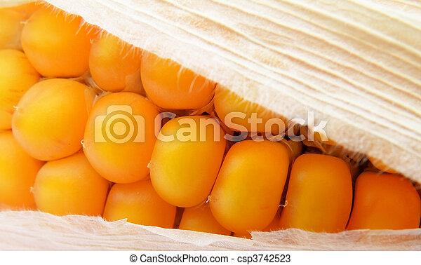 detail of a corn - csp3742523