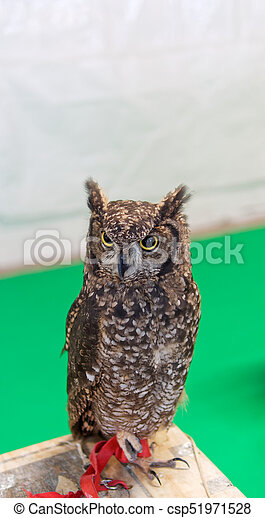 detail of a owl - csp51971528