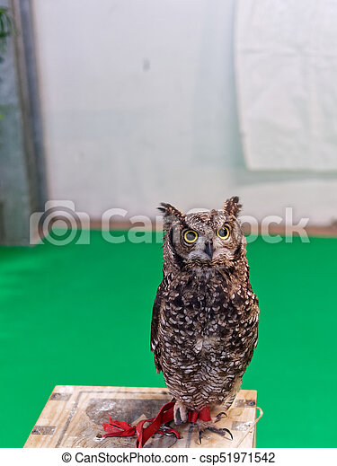 detail of a owl - csp51971542