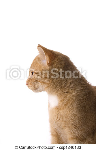 detail of a small cat on - csp1248133