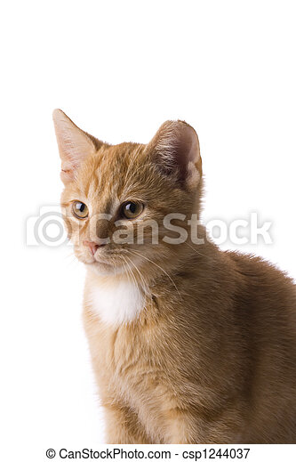 detail of a small cat - csp1244037