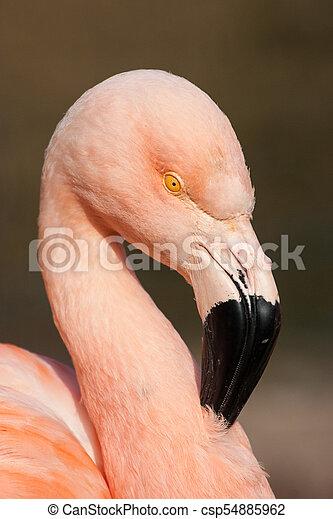 Detail of cuban flamingo - csp54885962
