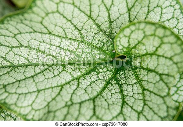 detail of leaf - csp73617080