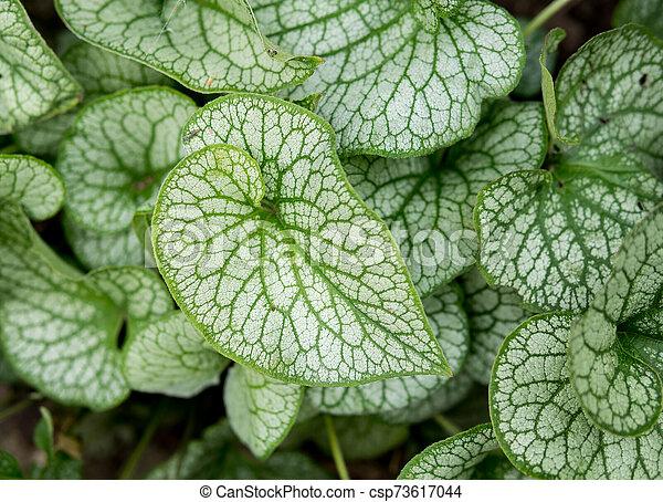 detail of leaf - csp73617044