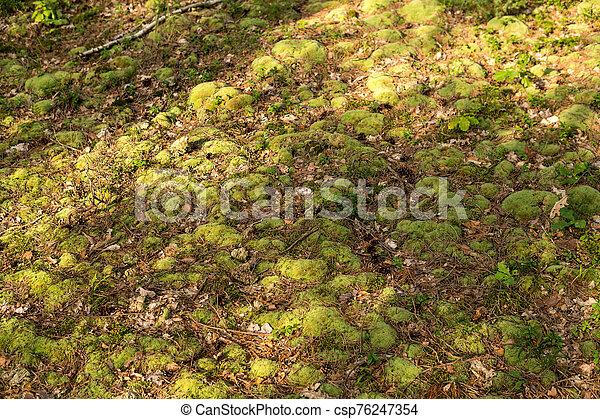 detail of moss - csp76247354