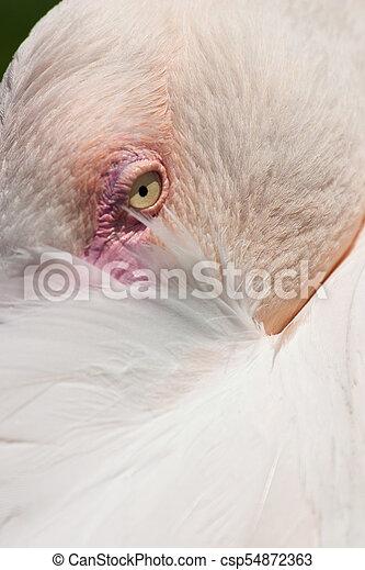 Detail of resting pink flamingo - csp54872363