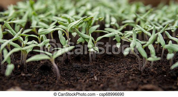 detail of small seedlings - csp68996690