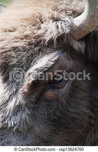 Detail of the eye of european bison - csp13624760