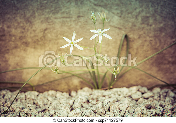 detail of two small white flowers - csp71127579