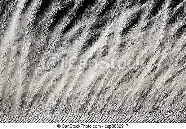 detail of white ostrich feather - csp8882917