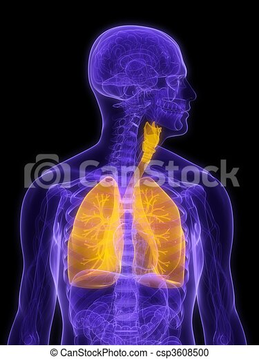 detailed lung - csp3608500