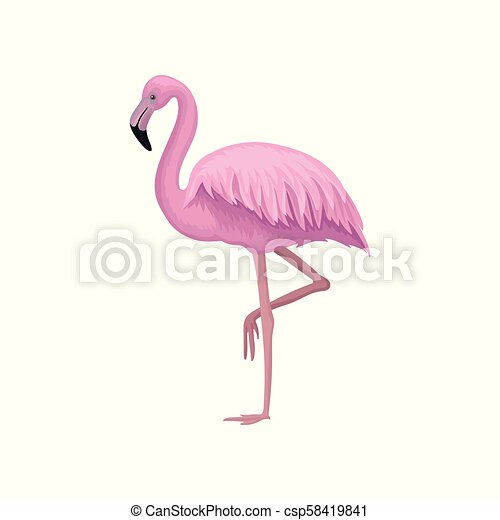 detailed vector icon of beautiful flamingo with gentle pink feathers, long  legs and neck. exotic bird. element for postcard   canstock  can stock photo