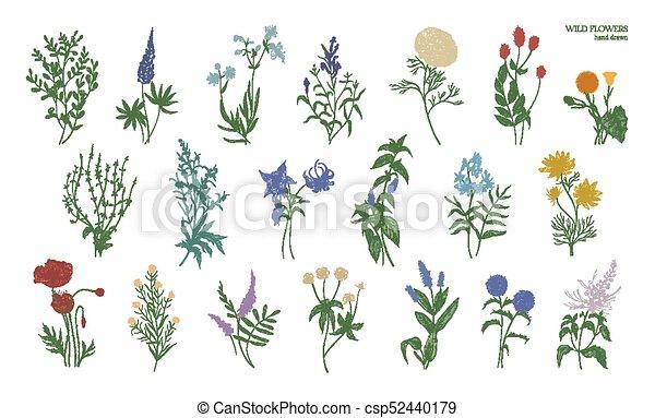 detallado hermoso conjunto pradera herb ceo dibujos ilustraci n con vectores buscar. Black Bedroom Furniture Sets. Home Design Ideas