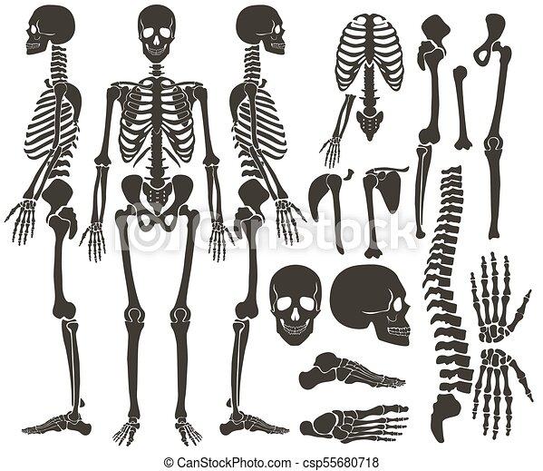 Detallado, oscuridad, conjunto, silueta, esqueleto, collection ...