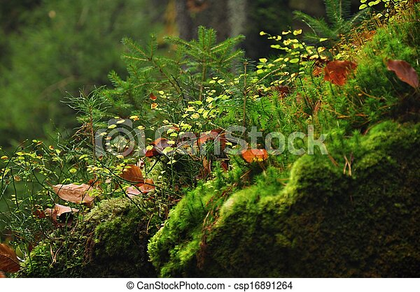 Moss de detalle - csp16891264