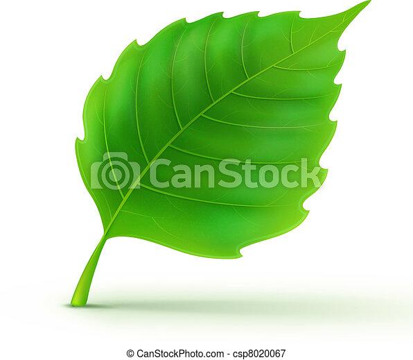 dettagliato, foglia verde - csp8020067