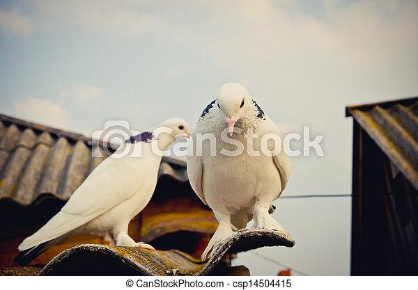 deux, colombes - csp14504415