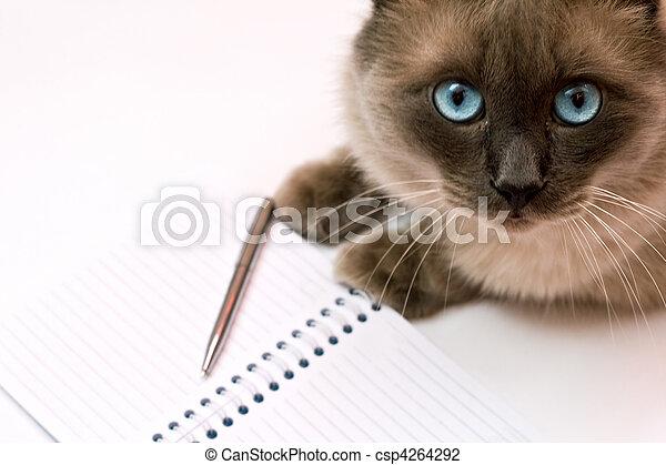 devant, cahier, chat - csp4264292