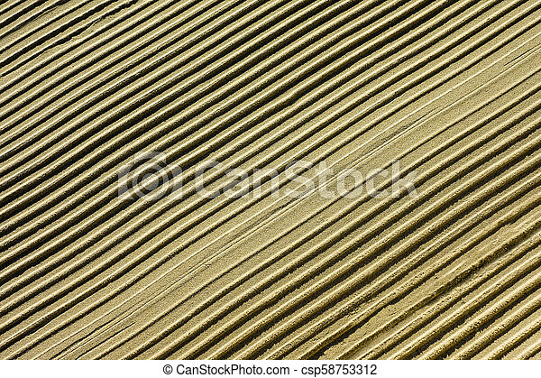 Diagonal parallel ripples in the sand - csp58753312