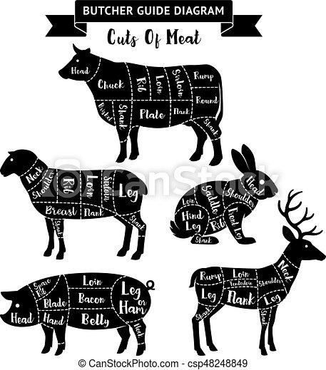 diagram., 肉, 肉屋, ベクトル, 切口, ガイド, illustrations. - csp48248849