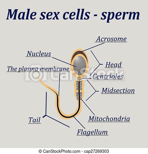 Sex-Video-Diagramm