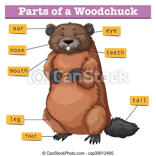 diagram showing parts of woodchuck illustration rh canstockphoto com woodchuck clipart free Fish Clip Art