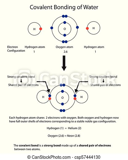 diagram to illustrate covalent bonding in water with a fully labelled  diagram  - csp57444130