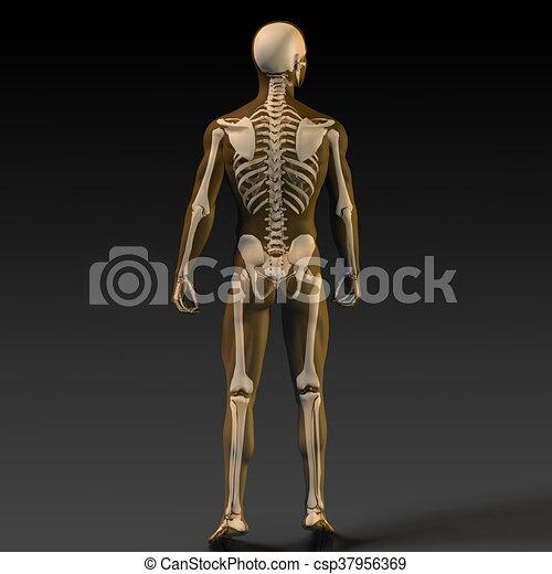 Diagramm, menschlicher knochen, struktur. Diagramm, schwarz, knochen ...