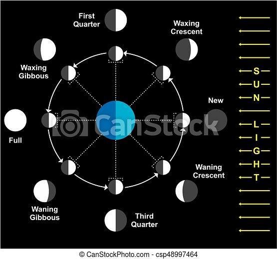 Diagramm, phasen, mond. Diagramm, wissenschaft, phasen, bildung, mond.