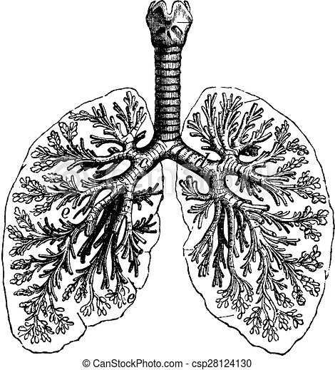 Diagrams Of Two Human Lungs Vintage Engraving Diagrams Of Two