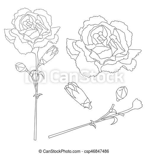 3b2300e25 Dianthus caryophyllus outline - carnation flower, clove pink. national  flower of spain, monaco, and slovenia. vector illustration. isolated on  white ...