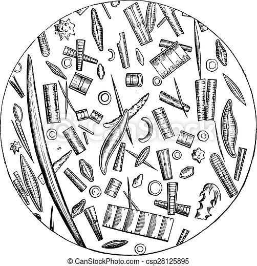 Diatoms, microscopic pictures, vintage engraving. - csp28125895