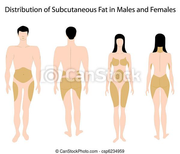 Subkutanes Fett in Menschen - csp6234959