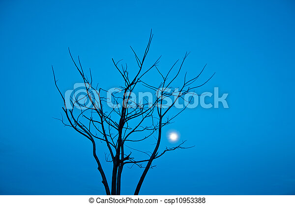 Died tree - csp10953388