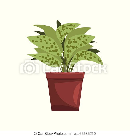ffenbachia indoor house plant in brown pot, element for decoration on house slugs, house decorations, house vines, house flowers, house fire, house home, house mites, house nature, house design, house people, house crafts, house family, house gifts, house plans, house rodents, house cars, house candy, house ferns, house chemicals, house stars,