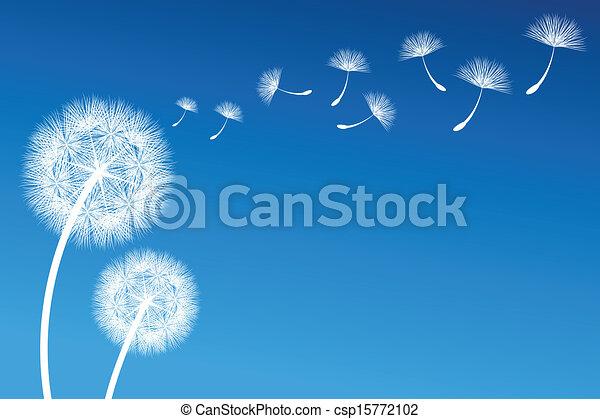 Dandelion - csp15772102